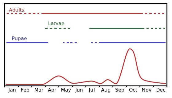 Populationsdynamik einer Olivenfruchtfliege